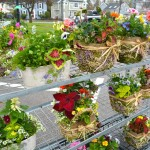 may-7-plant-sale-01