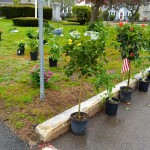 may-7-plant-sale-02